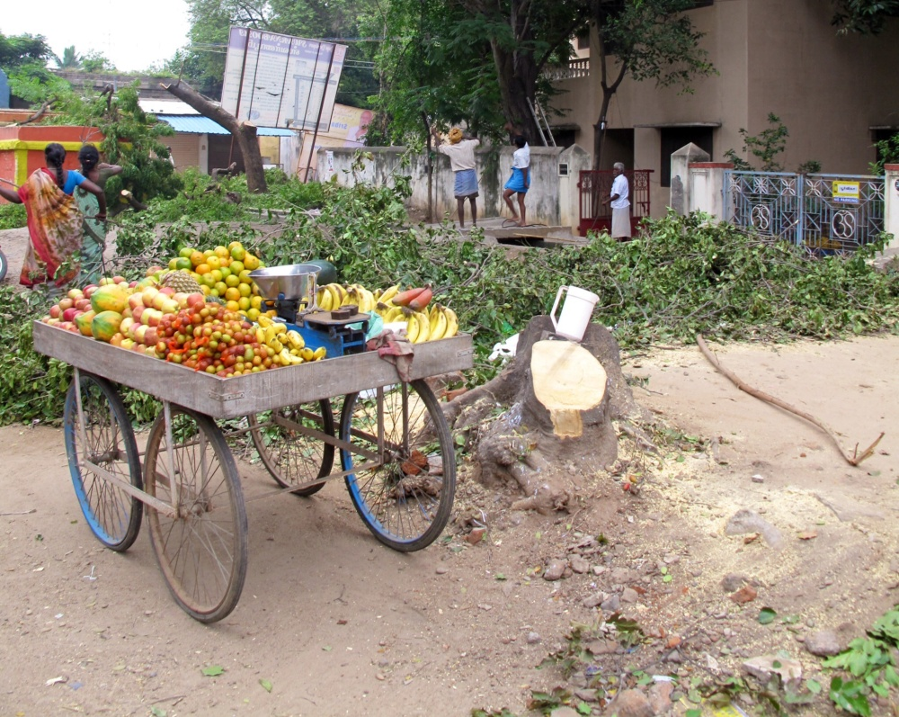 This fruit cart has operated from the shade of this Pongam tree for many years.